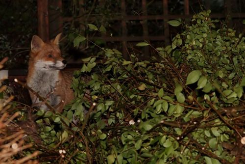 This is one of my  favourite blogs  - a guy in Sussex taking amazing photo's in his back garden - he has some cool visitors.