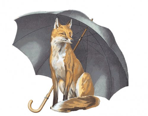 Fox umbrellas - keeping me dry since 2pm today.