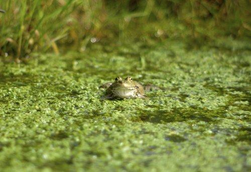 Froggy cropped  (via  tumblr - maxcady808's Tagged Photos )