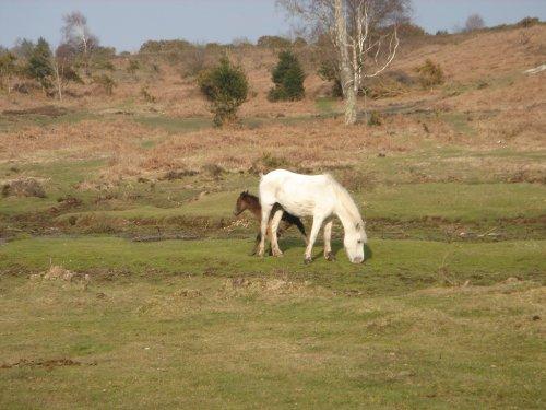 New born foal  (via  maxcady808's Photos )