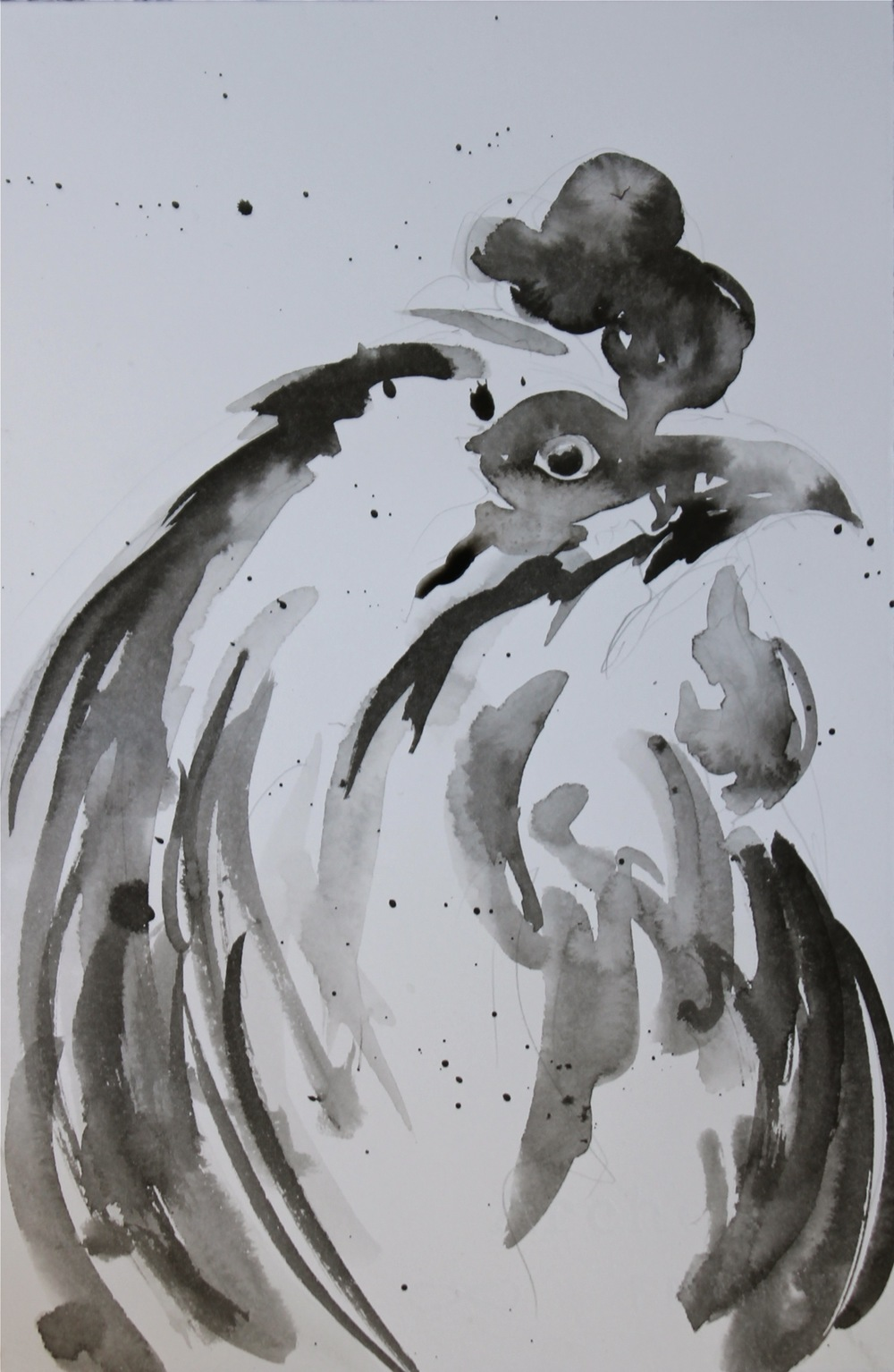 Meg rooster in ink