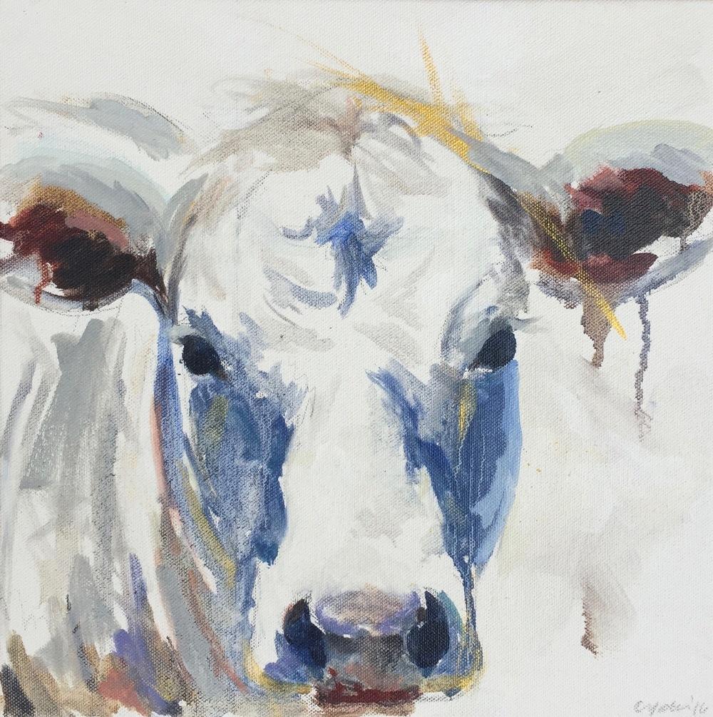 Cow study II