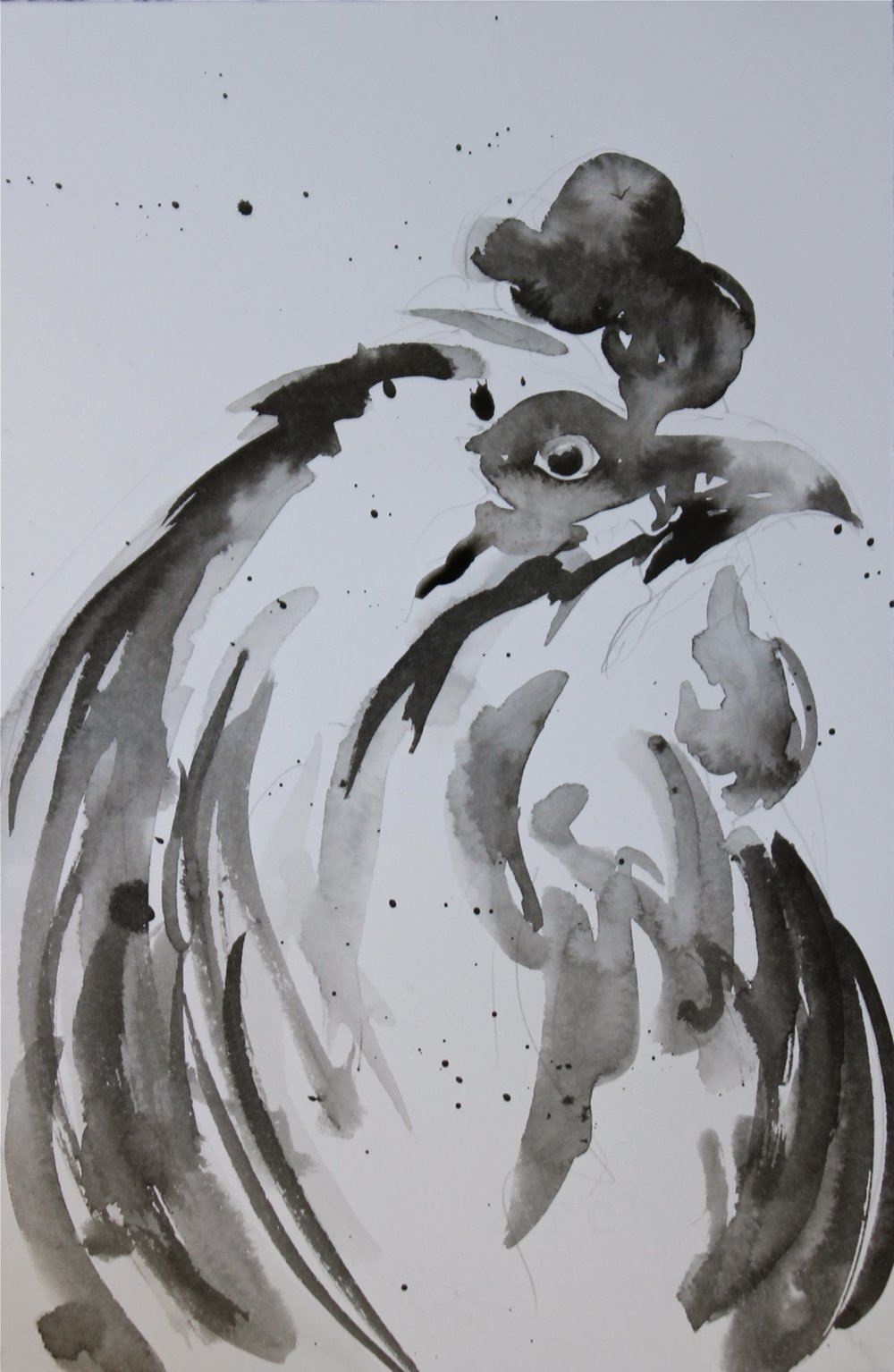 Rooster study