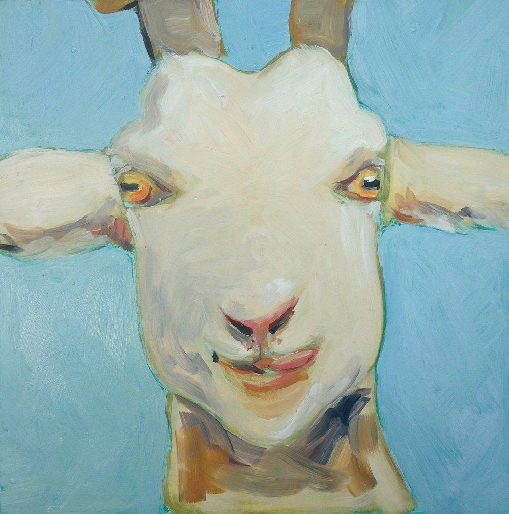 Serenbe goat