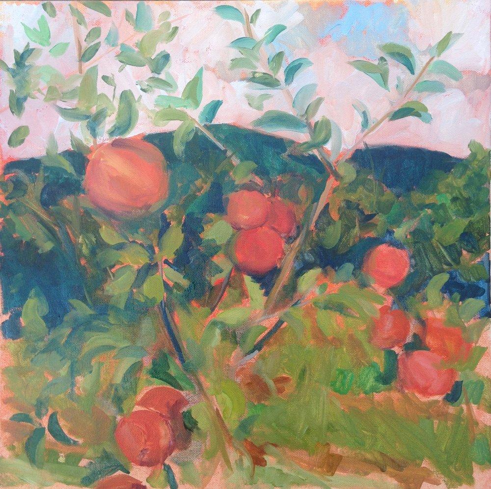 Blue Ridge Orchard