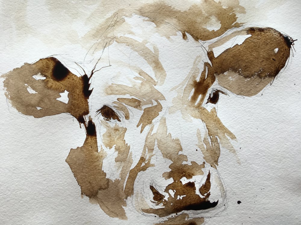 cow study in walnut ink