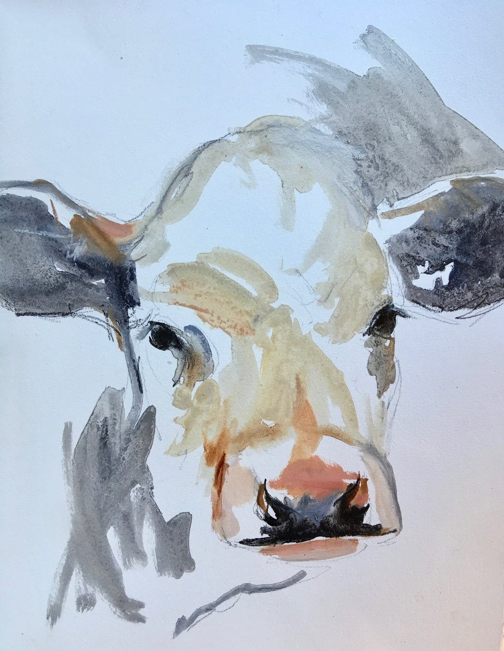 Cow Study on paper
