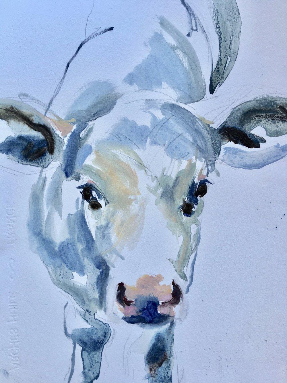 Cow study on paper II
