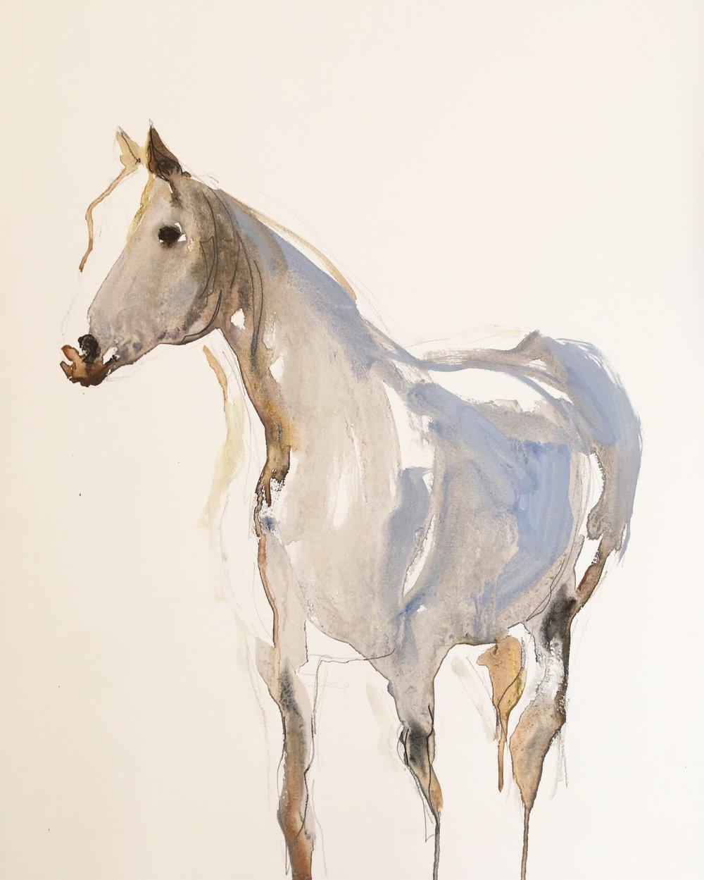 Horse Study II