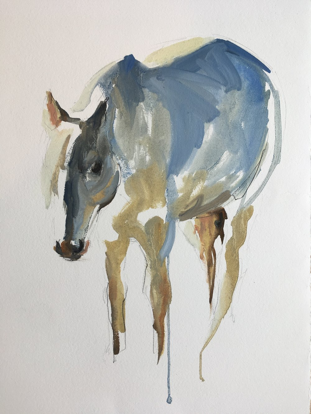 Horse study I