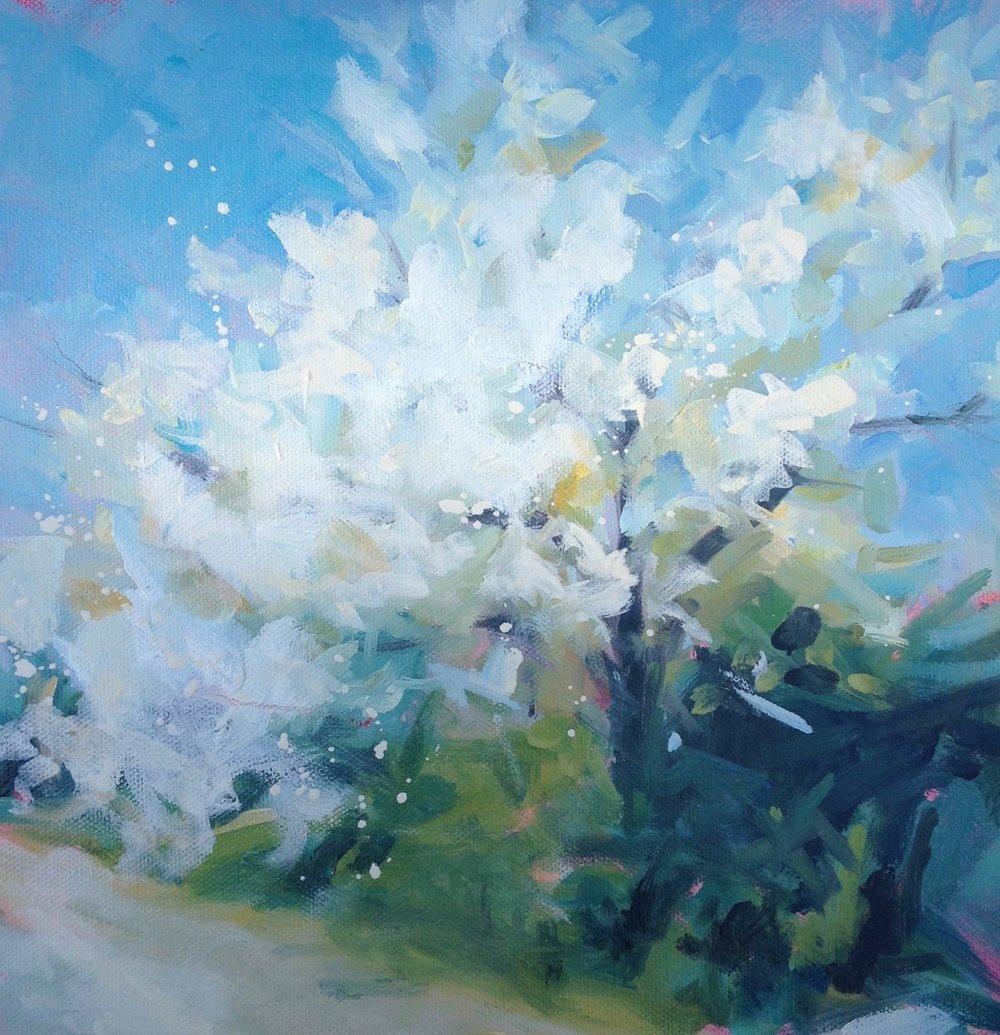 Cherry tree study