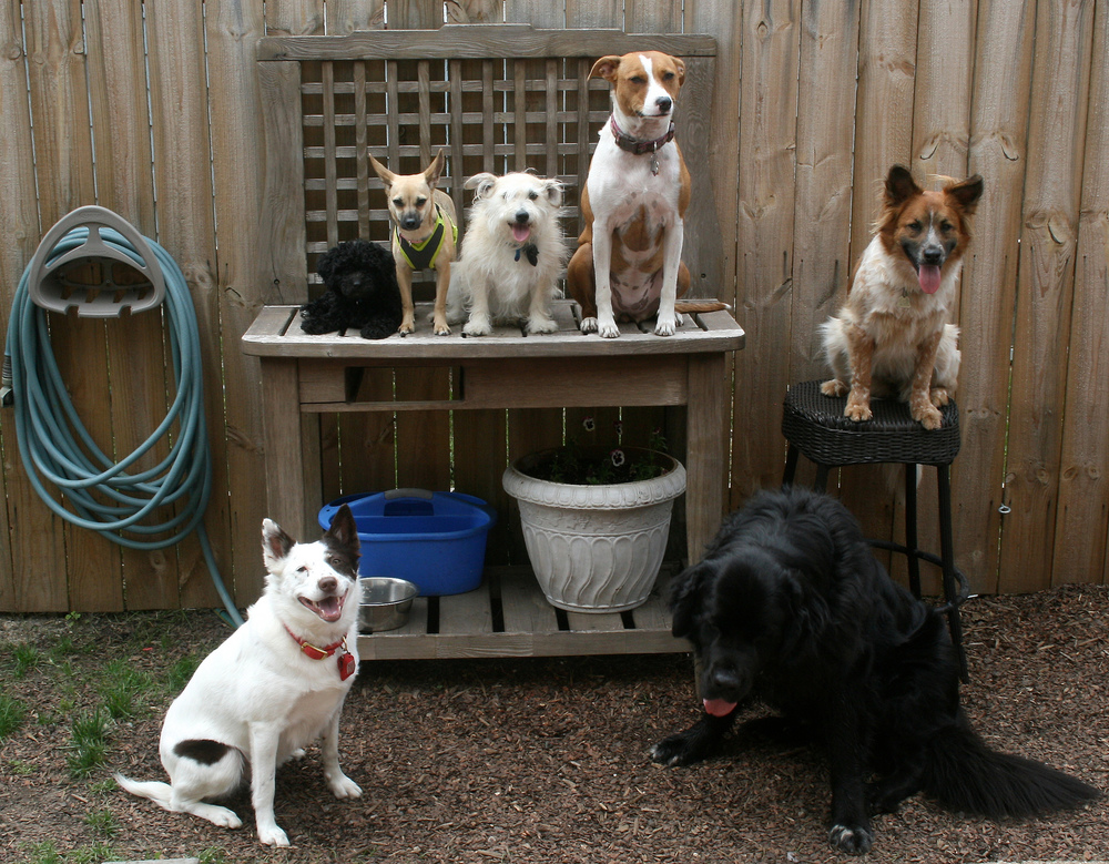 03-services-doggardengroup.jpg