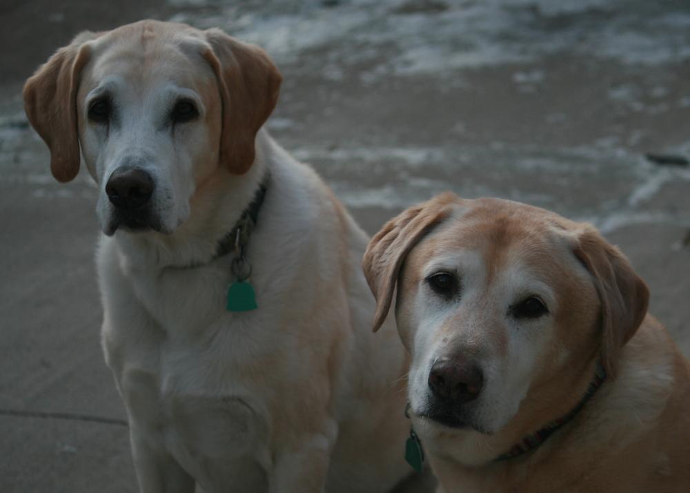 Jake & Franklin