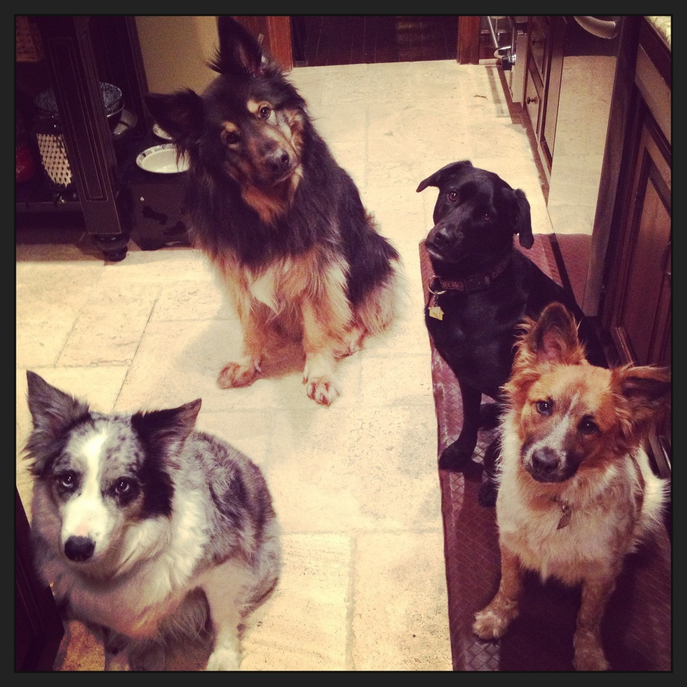 """Four picture-perfect """"say please"""" sits by Maggie, Jackson, Bessie and Snickers!"""