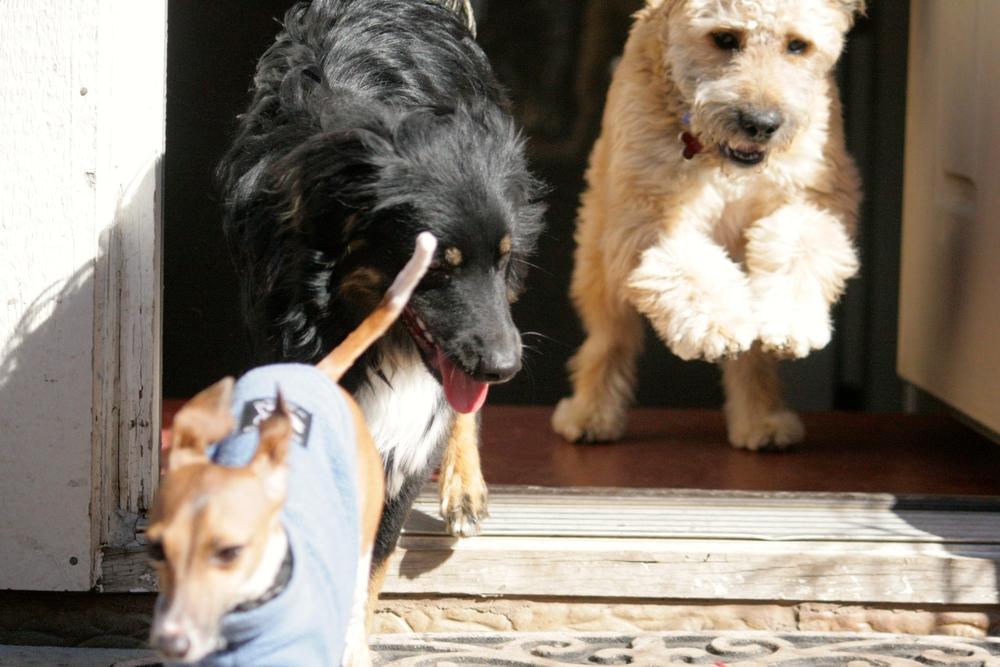 Bella, Baxter & Zach