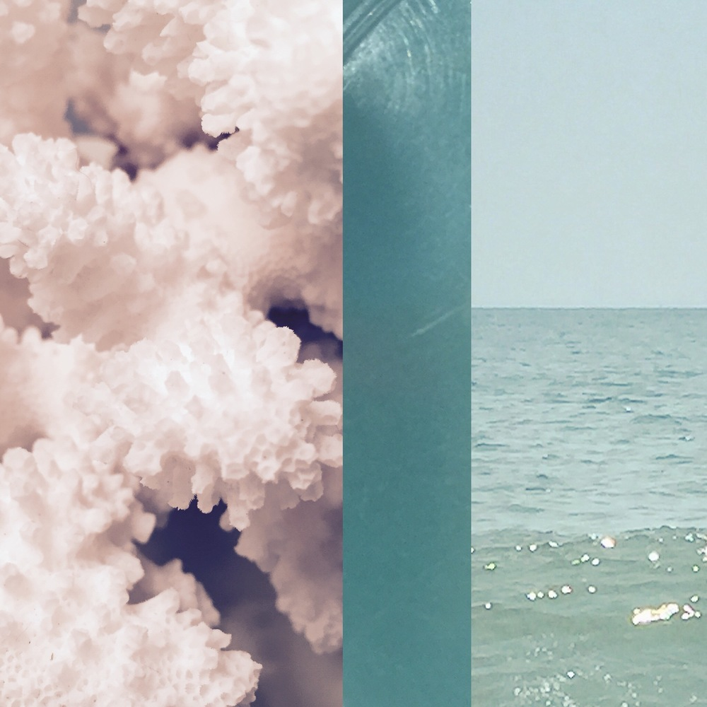 coralPET5.jpg