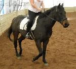 Horse Pics 050.jpg