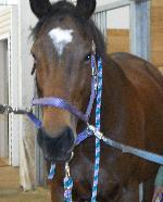 Horse Pics 041.jpg