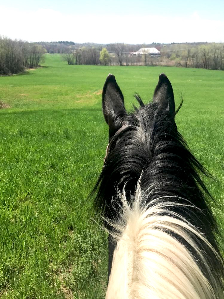 """Oops! - We currently do not have any horses listed for sale. Please see our """"For Lease"""" page for available leases."""