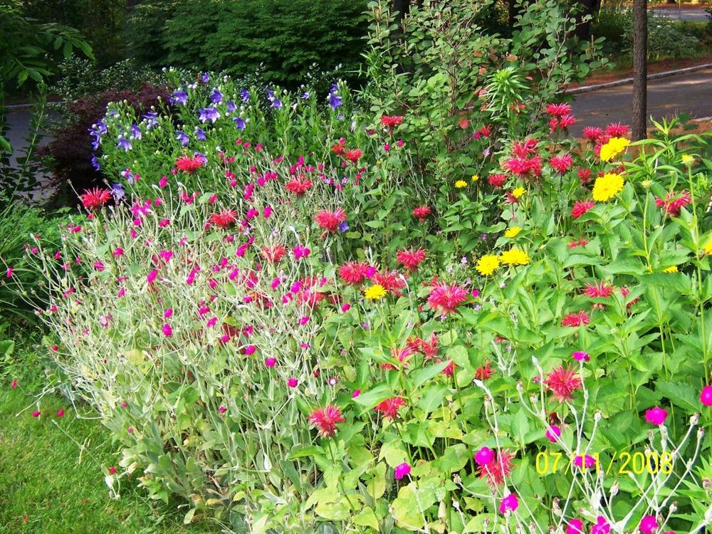 Perennials08002.jpg