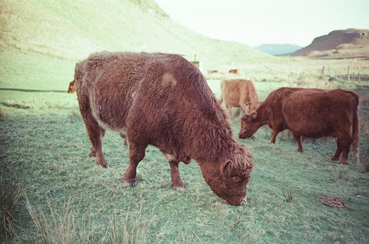 isle-of-kerrera-scotland-london-photographer-ksenia-zizina-11.jpg