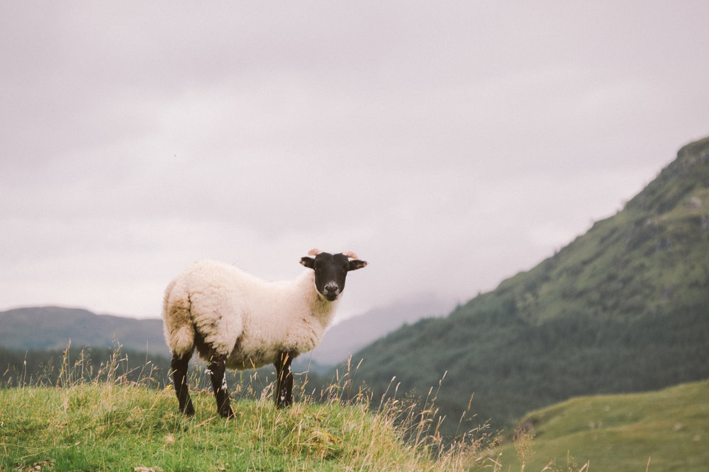 fat_creative_travel_blog_loch_sloy_easy_hike_scotland-18.jpg