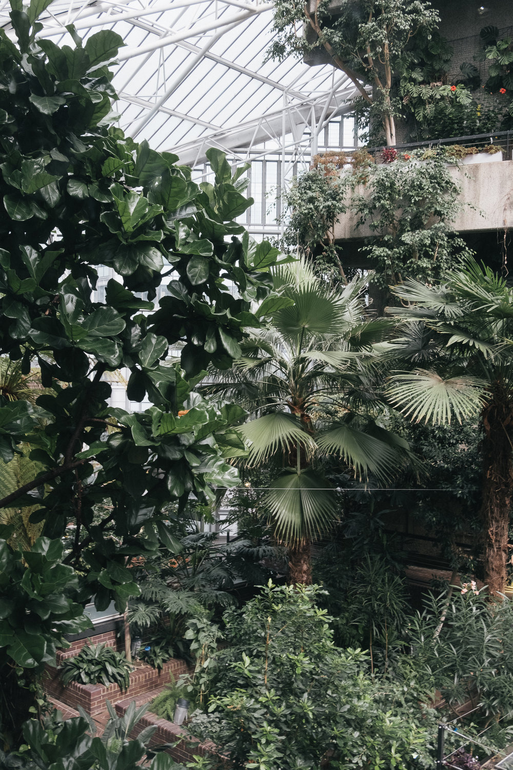 Conservatory is open to public only on Sundays