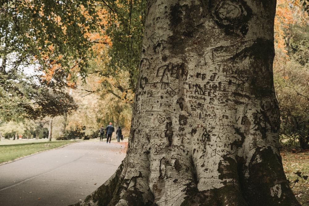 The Graffiti Tree