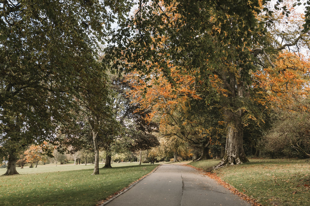 The paved paths in the park are well maintained and easy to walk on