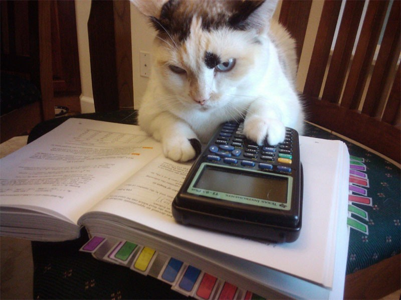 cat_studying-3055.jpg