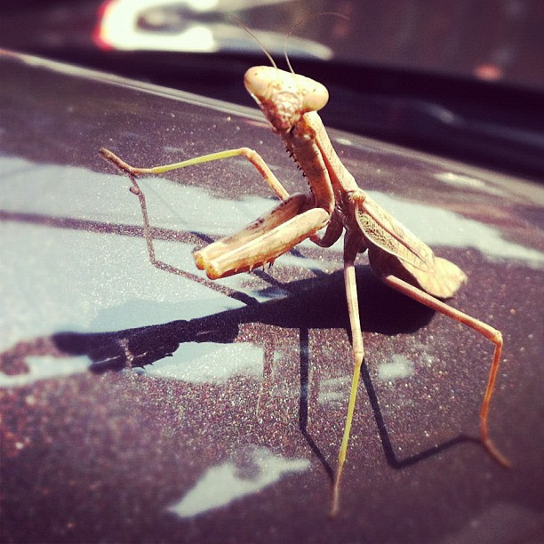 Carpooling… (Taken with  instagram )