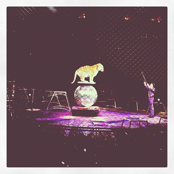 Having a great time at the #circus #greatestshowonearth (Taken with  instagram )