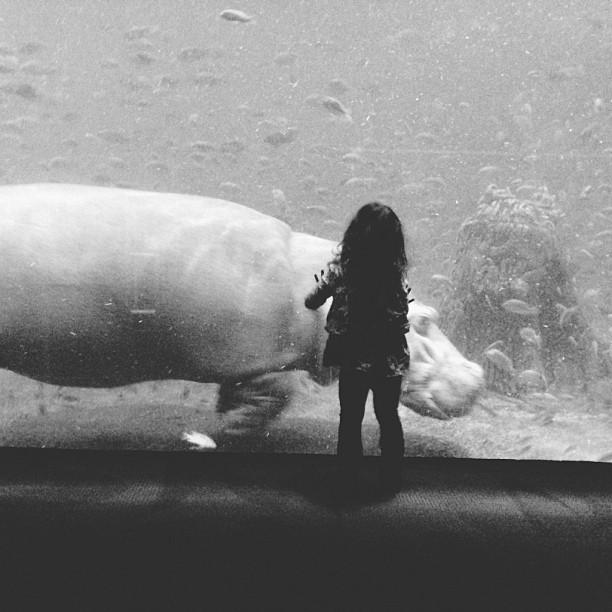 """""""Dad, can I have this hippo?"""" #vscocam #adventureaquarium (at Adventure Aquarium)"""