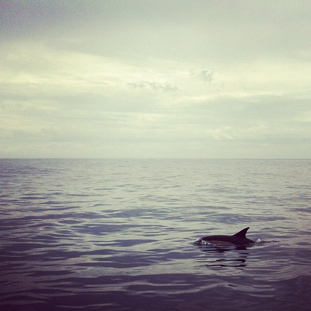 Sea Life #outatsea (Taken with  instagram )