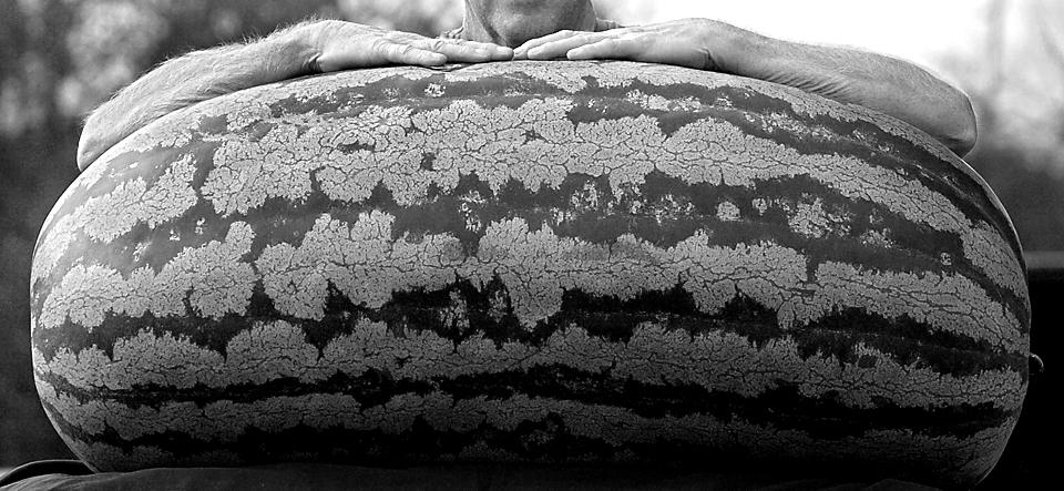 giant-melon - black and white.jpg