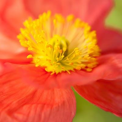 Red_Flower_2636.jpg