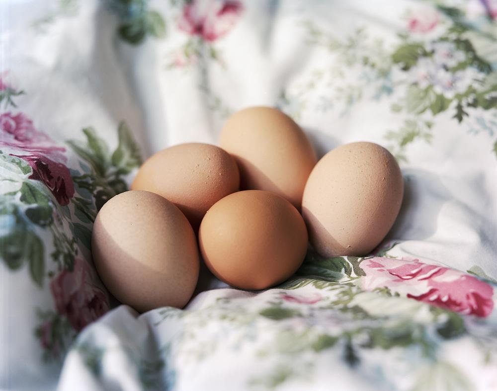 Renee Ricciardi Vivum ex Vivo Biogenesis 1 Eggs.jpg