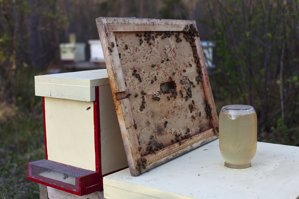 Renee Ricciardi Vivum ex Vivo Biogenesis 7 Bees.jpg