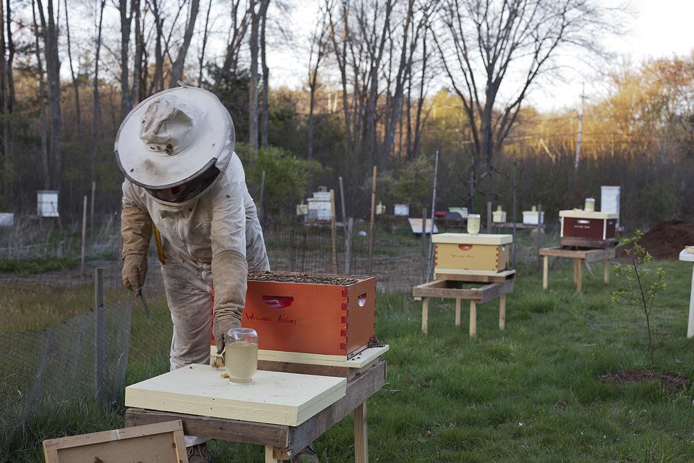 Renee Ricciardi Vivum ex Vivo Biogenesis 8 Beekeeper.jpg