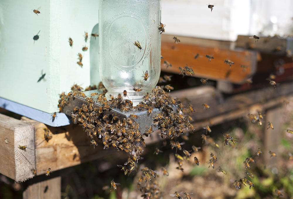 Renee Ricciardi Non Nobis Honeybees 15.jpg