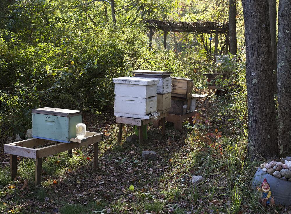 Renee Ricciardi Non Nobis Honeybees 16.jpg