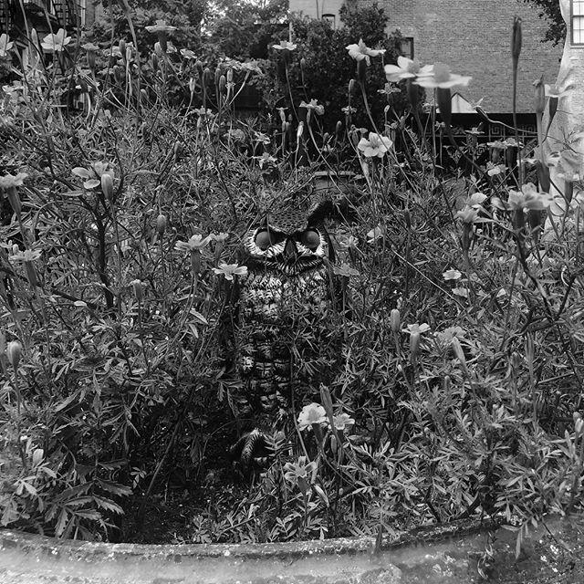 Hoo you looking at? #owlsofinstagram #owl  #streetart #streetsofnewyork #bnw #bnwphotography