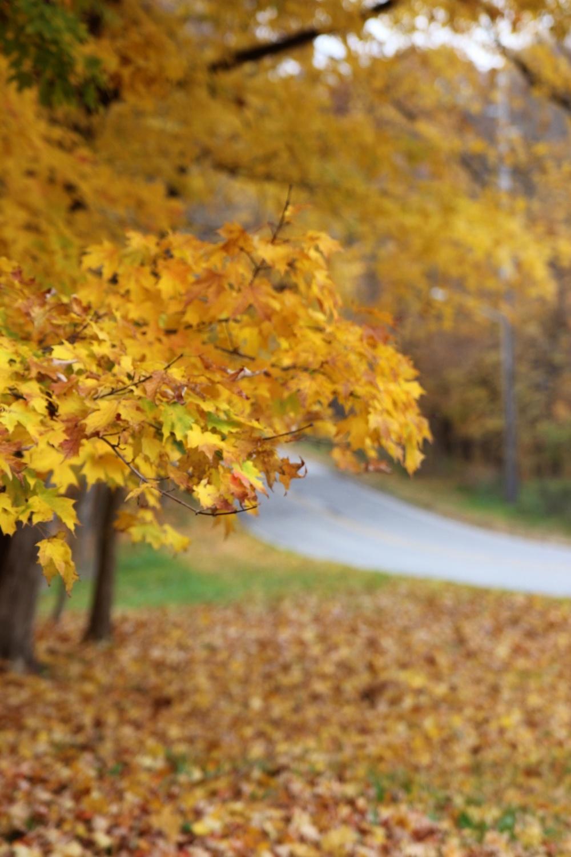 Photo Oct 17, 10 30 15 PM.jpg