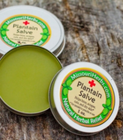 Plantain Salve - Historically used for bites, scrapes, cuts, and burns.* *Not intended to prescribe or cure. 1 oz. - $7. 2 oz. - $12.