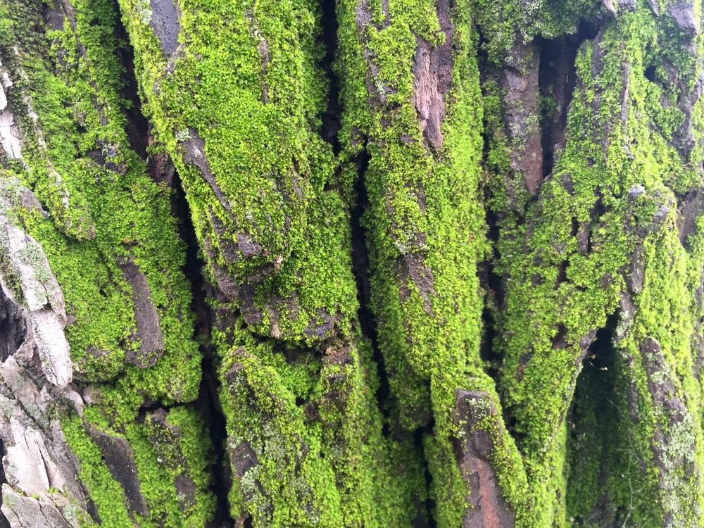 """""""I'm Lichen this Moss"""""""