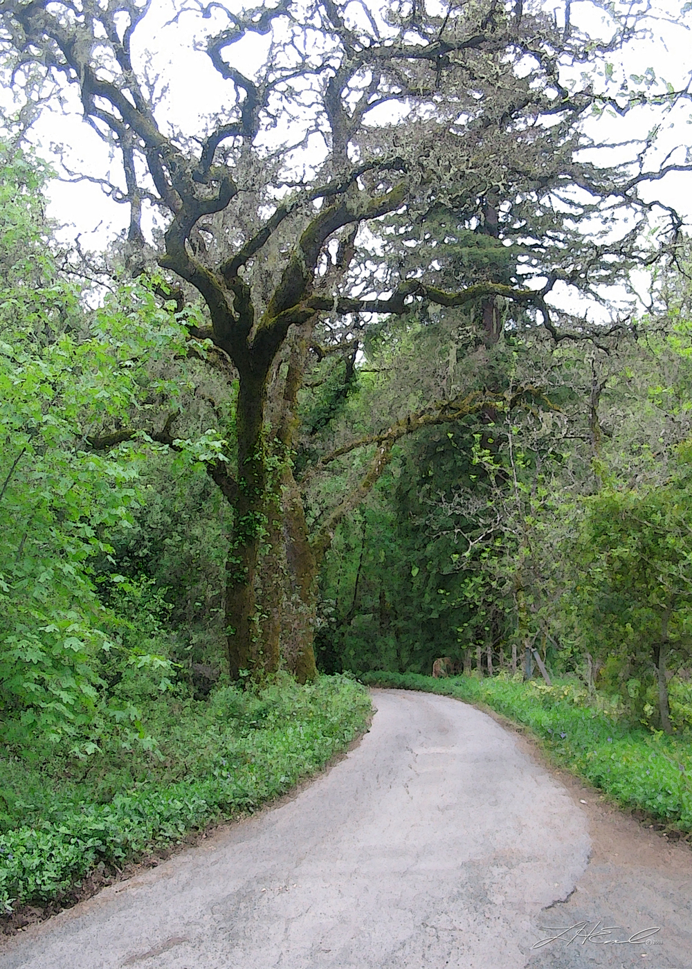 treeroad5x7.jpg