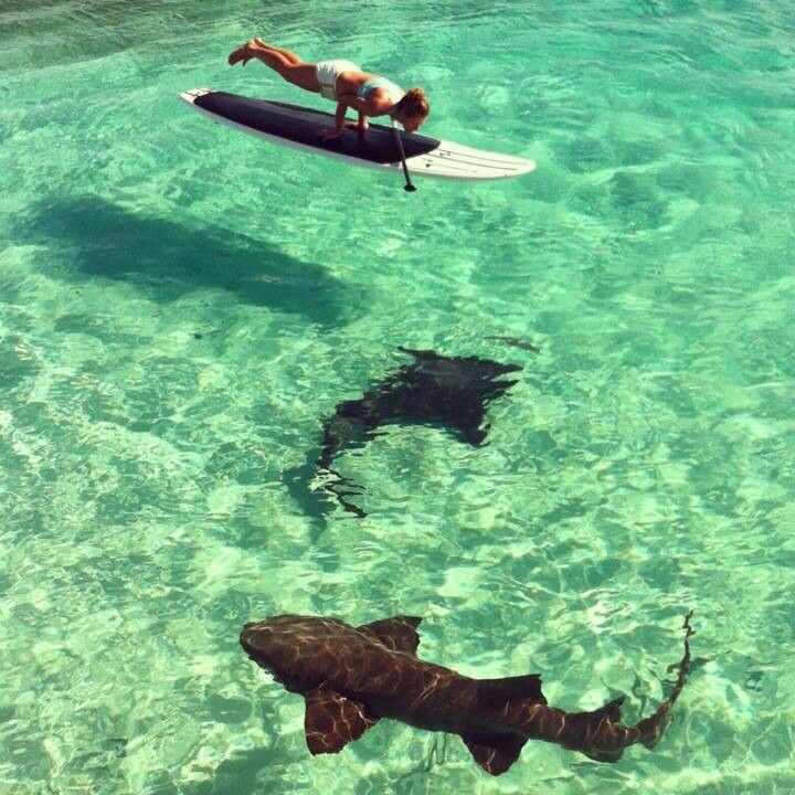 I really found a pic of yoga + sharks! Source.