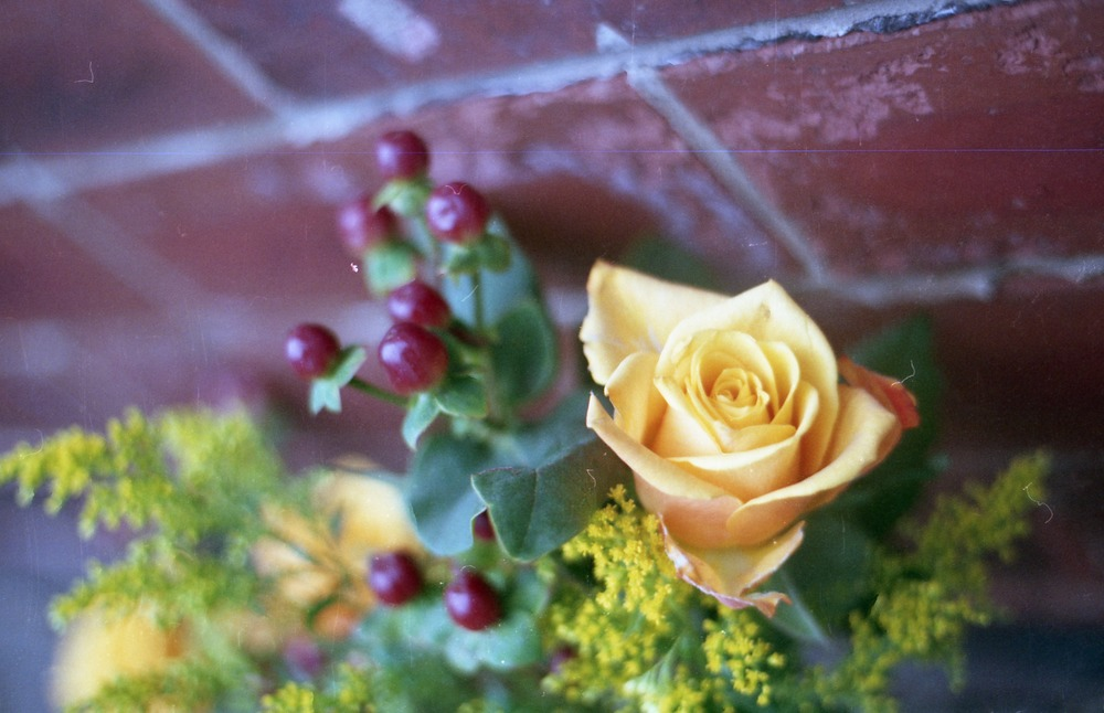 (I got a little carried away taking photos of the yellow roses, I just love yellow!)