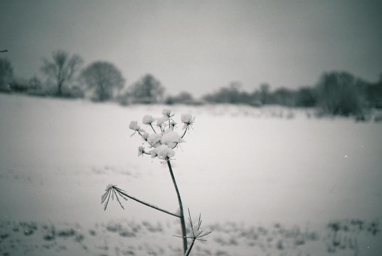 Snow+detail.jpg
