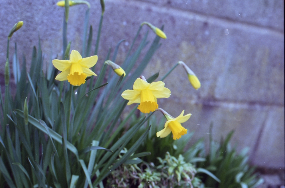 57/366 - More signs of Spring, eep!